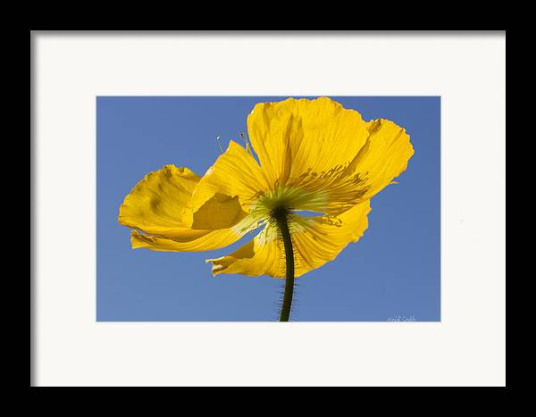 Background Framed Print featuring the photograph Bloom Time by Heidi Smith
