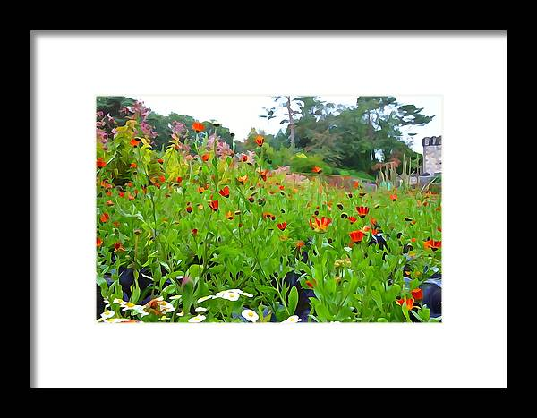 Poppy Framed Print featuring the photograph Blooming Beauties by Charlie and Norma Brock