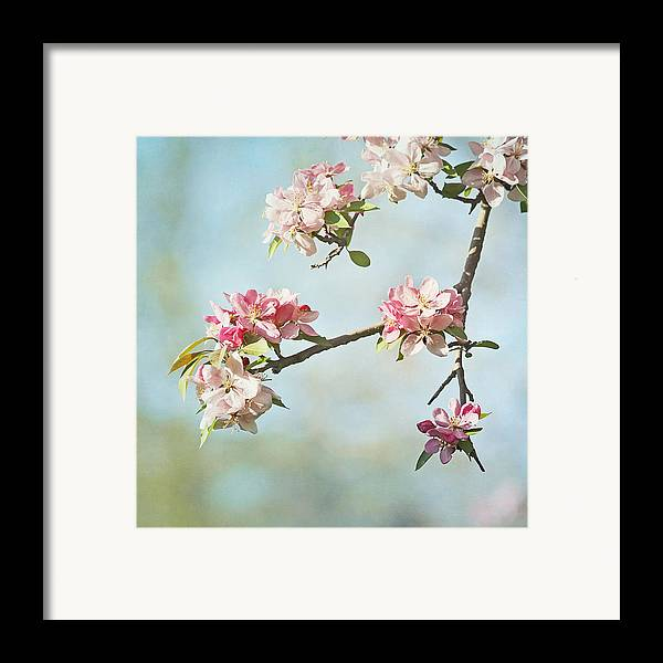 Nature Framed Print featuring the photograph Blossom Branch by Kim Hojnacki