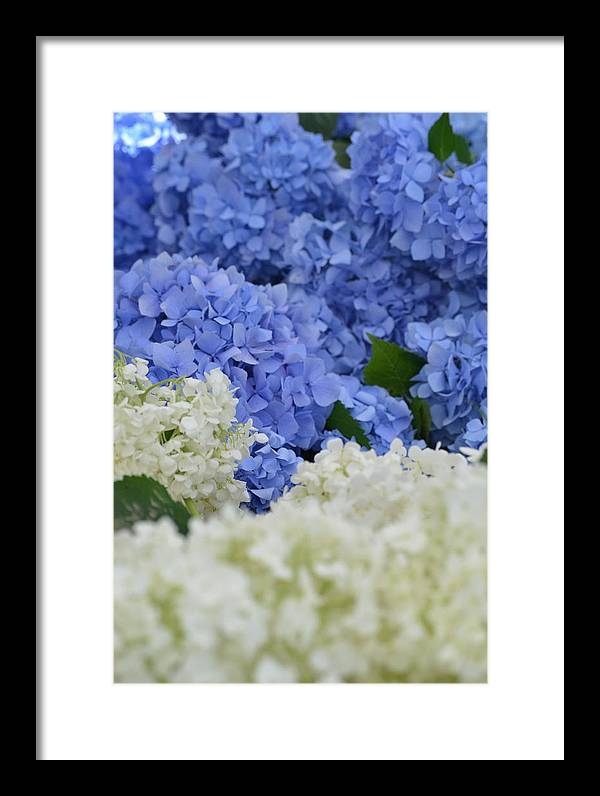 Blue Framed Print featuring the photograph Blossoms by Turtleberry Press Photography