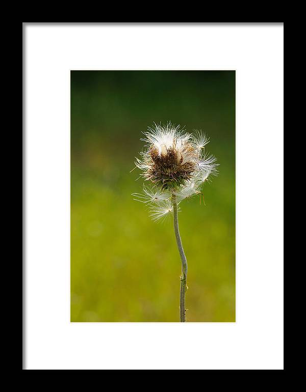 Fall Flower Framed Print featuring the photograph Blowing In The Wind by Sarah Rodefeld