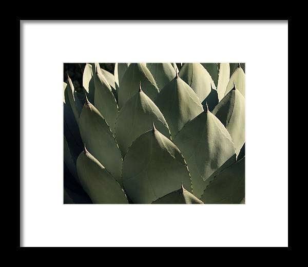 Blue Aloe Framed Print featuring the photograph Blue Aloe by Ellen Henneke