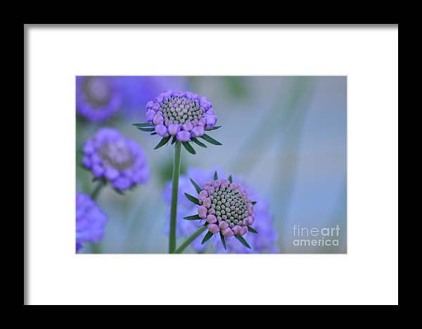 Blue Framed Print featuring the painting Blue by Angela Maher