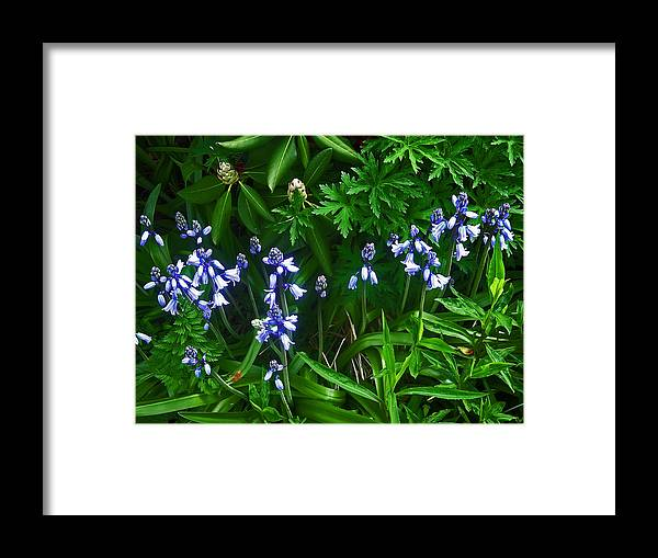 Flower Framed Print featuring the photograph Blue Bells by Aimee L Maher ALM GALLERY