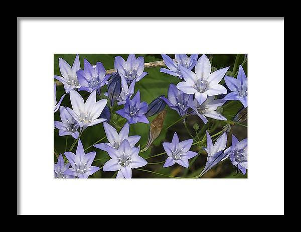 Framed Print featuring the photograph Blue Bells by Joe Arsenian