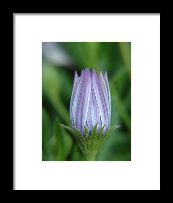 Flower Framed Print featuring the photograph Blue Bud by Jeri lyn Chevalier