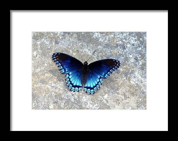Butterfly Framed Print featuring the photograph Blue Butterfly by Anne Marie Corbett