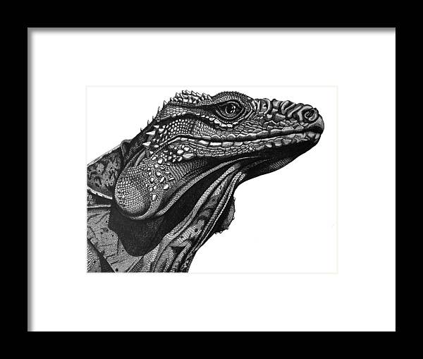 Lizard Framed Print featuring the drawing Blue Cayman Iguana by Tracey Gurr BA Hons