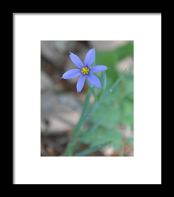 Blue Framed Print featuring the photograph Blue Flower by Frank Madia