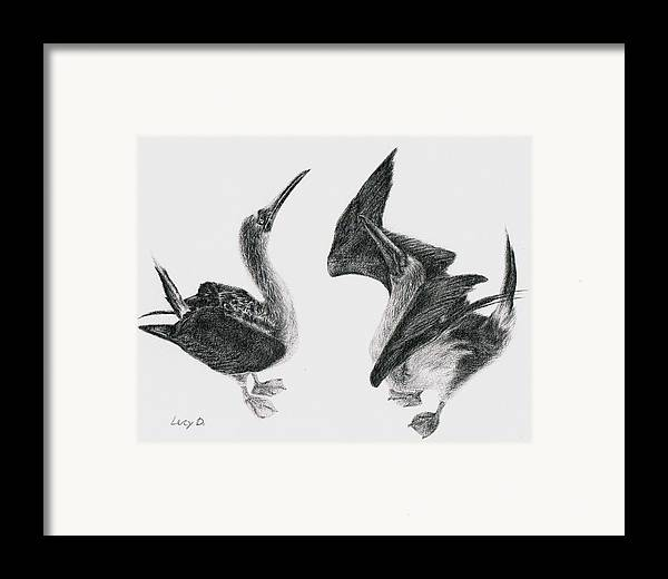 Animals Framed Print featuring the drawing Blue-footed Boobies by Lucy D