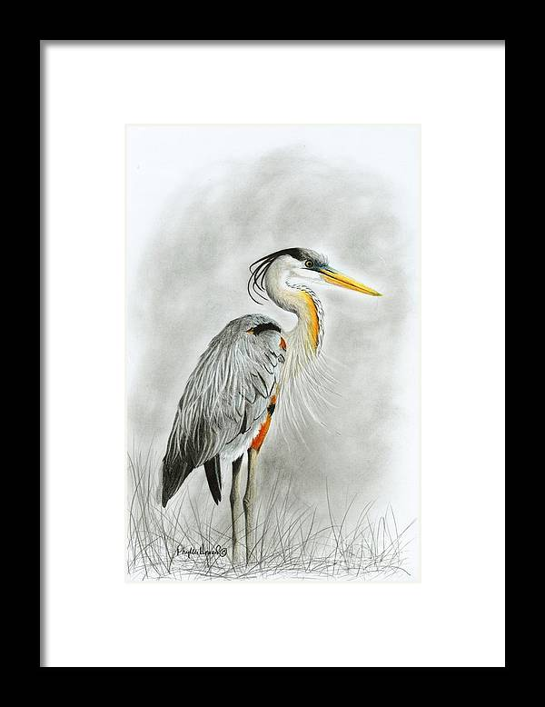 Heron Framed Print featuring the drawing Blue Heron 3 by Phyllis Howard
