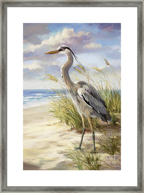 Blue Heron Framed Print By Laurie Hein