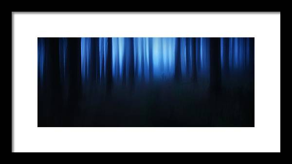 Trees Framed Print featuring the photograph Blue Hour by Burger Jochen