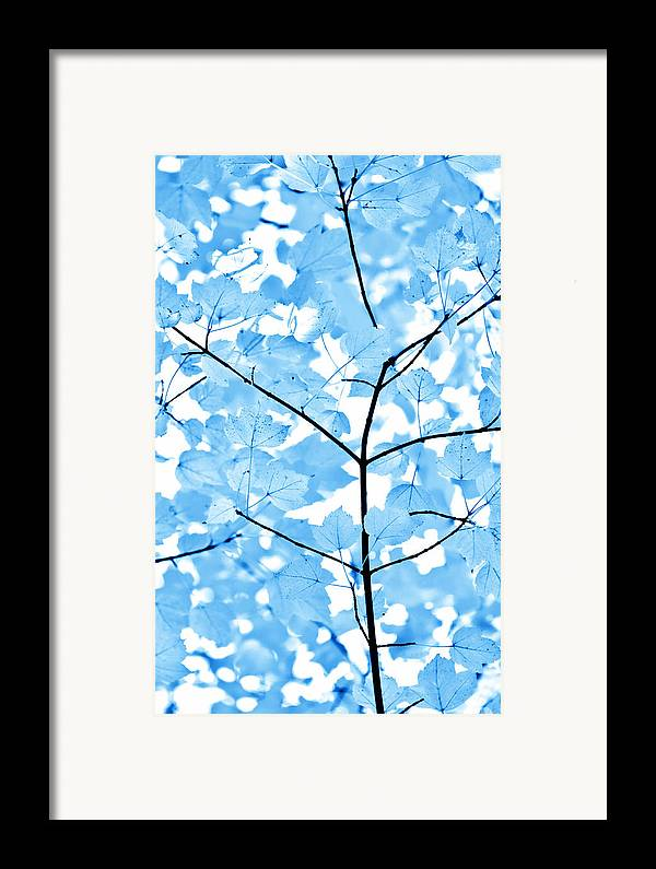 Leaf Framed Print featuring the photograph Blue Leaves Melody by Jennie Marie Schell