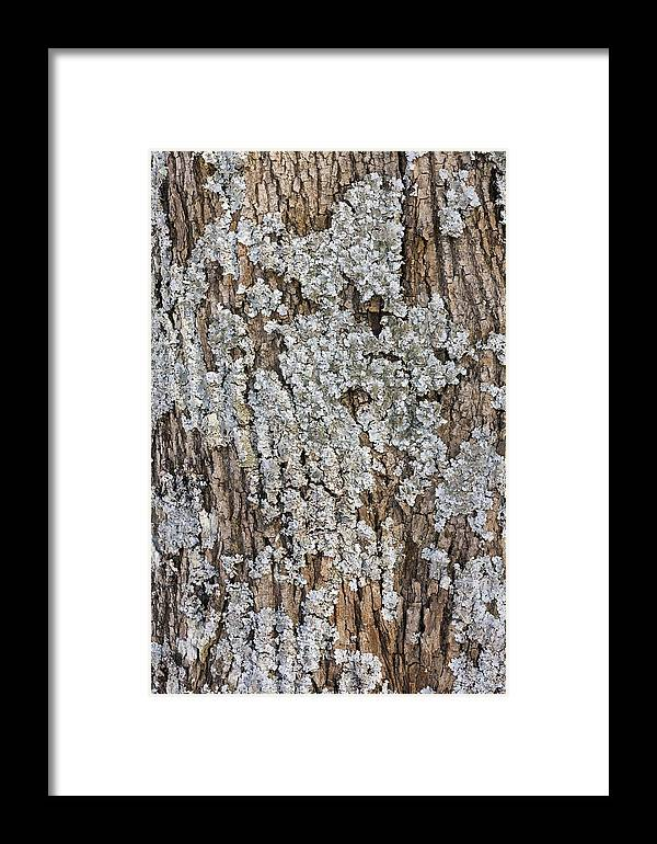 Woods Framed Print featuring the photograph Blue Lichen Grow On Oak by Aleksandr Volkov
