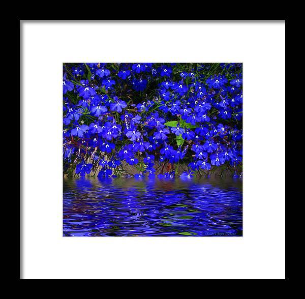 Flower Framed Print featuring the photograph Blue Lobelia by Joyce Dickens