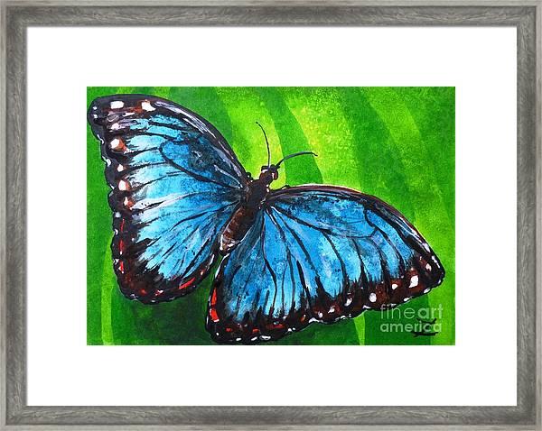 Charming Blue Morpho Butterfly Framed Print Featuring The Painting Blue Morpho  Butterfly By Zaira Dzhaubaeva