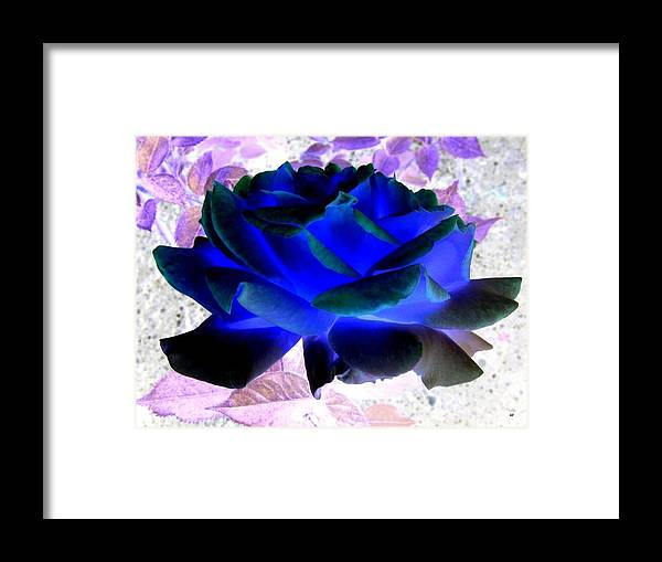 Blue Rose Framed Print featuring the digital art Blue Rose by Will Borden
