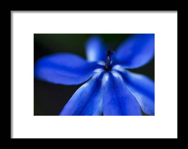 Color Framed Print featuring the photograph Blue Star by Arkady Kunysz