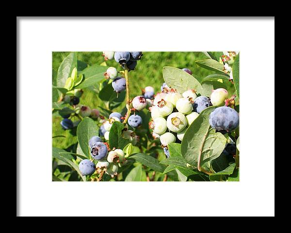 Big Framed Print featuring the photograph Blue Sweetness by Belinda Lee