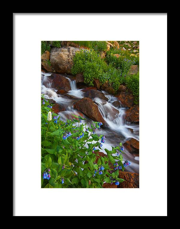 Stream Framed Print featuring the photograph Bluebell Creek by Darren White
