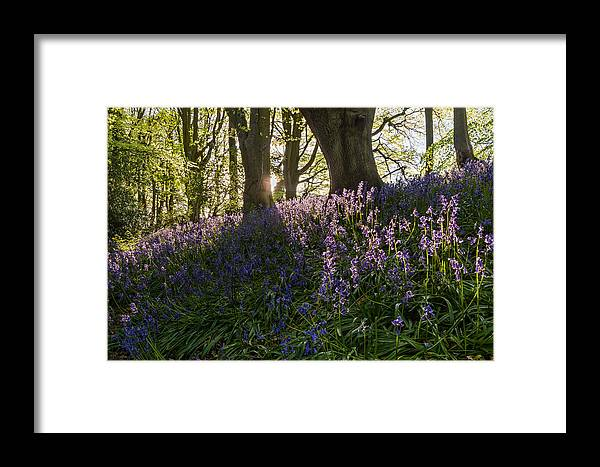 Northumberland Framed Print featuring the photograph Bluebells Backlit by David Head