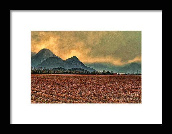 Blueberry Fields Framed Print featuring the photograph Blueberry Fields by Dawn Harris
