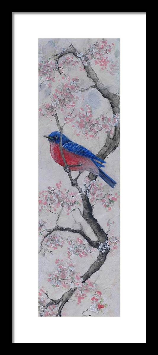 Bluebird Framed Print featuring the painting Bluebird In Cherry Blossoms by Sandy Clift