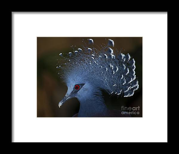 Festblues Framed Print featuring the photograph Blutiful.. by Nina Stavlund
