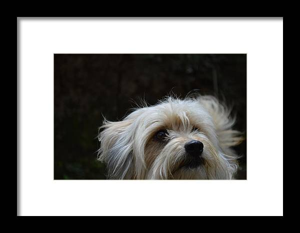 Dog Framed Print featuring the photograph Bob The Dog by Scott Ingram