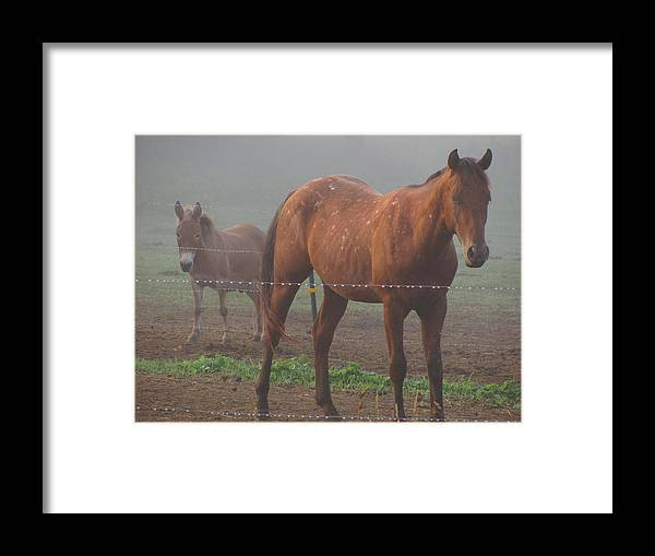 Horses Appaloosas Mini Mule Minnesota Framed Print featuring the photograph Bobby N Bo by Kim Eastwood