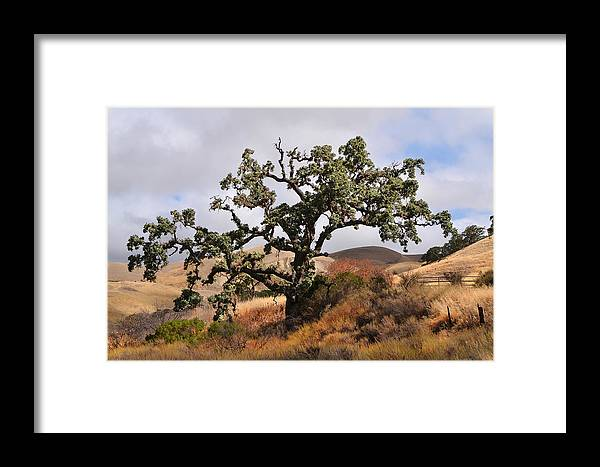 Del Valle Framed Print featuring the photograph Bobcats Tree by Karen W Meyer