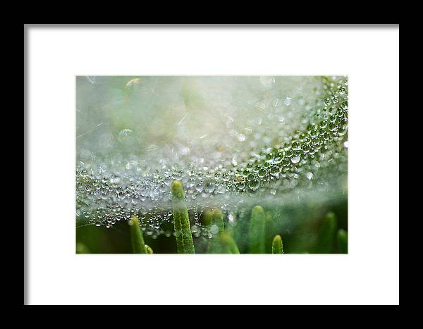 Bokeh Framed Print featuring the photograph Bokeh And Bubbles by Fraida Gutovich
