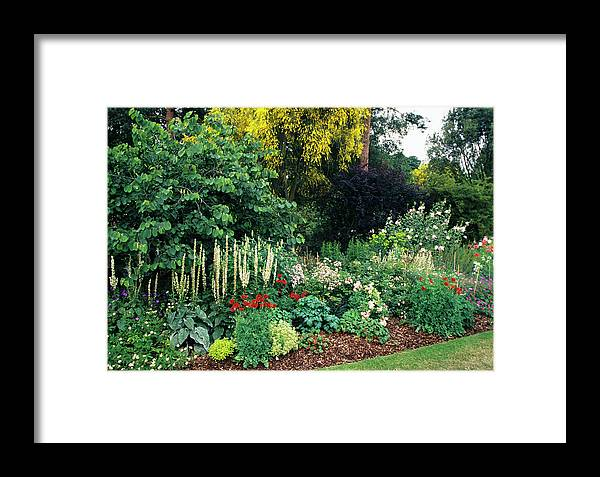 Genista Aetnensis Framed Print featuring the photograph Border At A Garden by Duncan Smith/science Photo Library