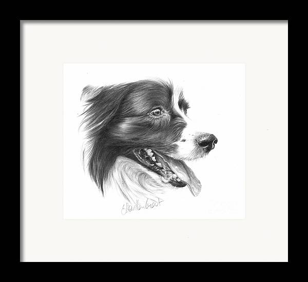 Dog Framed Print featuring the drawing Border Grin by Sheona Hamilton-Grant