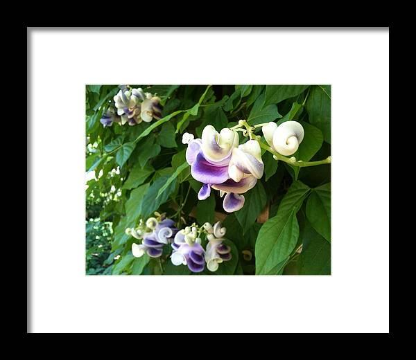 Botanic Garden Framed Print featuring the photograph Botanic Garden Flower by Lois Ivancin Tavaf