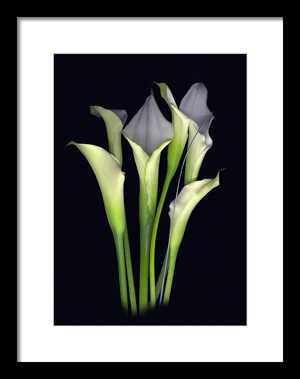 Calla Framed Print featuring the digital art Bouquet of Callas by Sandi F Hutchins