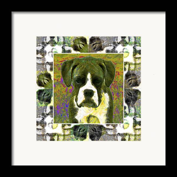 Animal Framed Print featuring the photograph Boxer Dog 20130126 by Wingsdomain Art and Photography