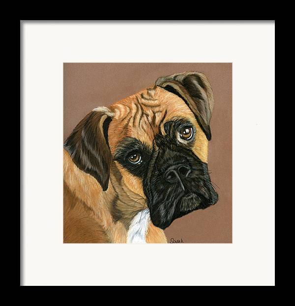 Boxer Dog Framed Print featuring the painting Boxer Dog by Sarah Dowson