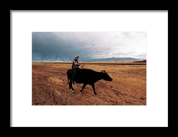Scenics Framed Print featuring the photograph Boy Sitting Cow In Field by Touch The Word By Heart.