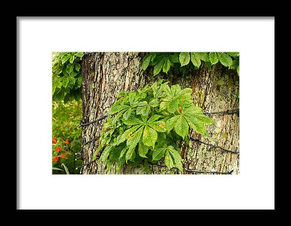 Leaf Framed Print featuring the photograph Braided Trunk by Mair Hunt