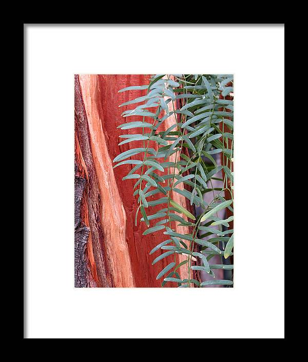 Tree Framed Print featuring the photograph Branches And Bark by Laurel Powell