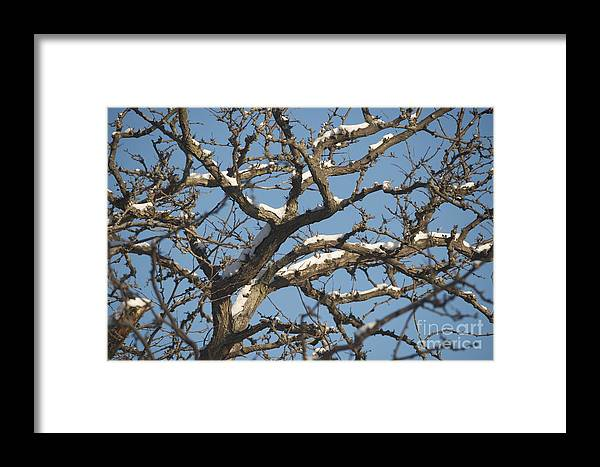 Snow Framed Print featuring the photograph Branches by Joseph Yarbrough