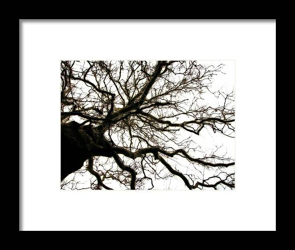 Branches Framed Print featuring the photograph Branches by Michelle Calkins