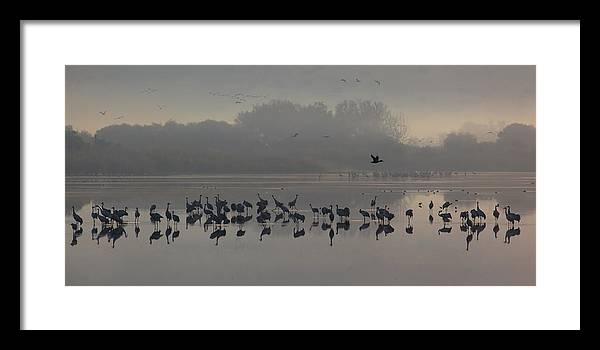 Cranes Framed Print featuring the photograph Break Of A New Day by Uri Baruch