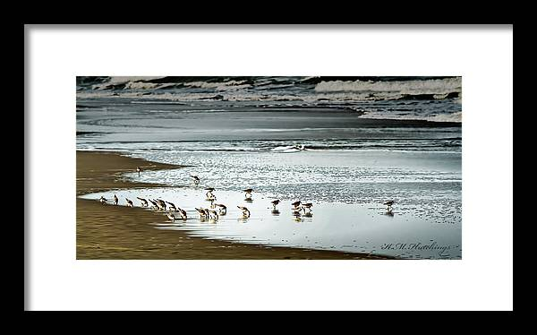Birds Framed Print featuring the photograph Breakfast by Keith Hutchings