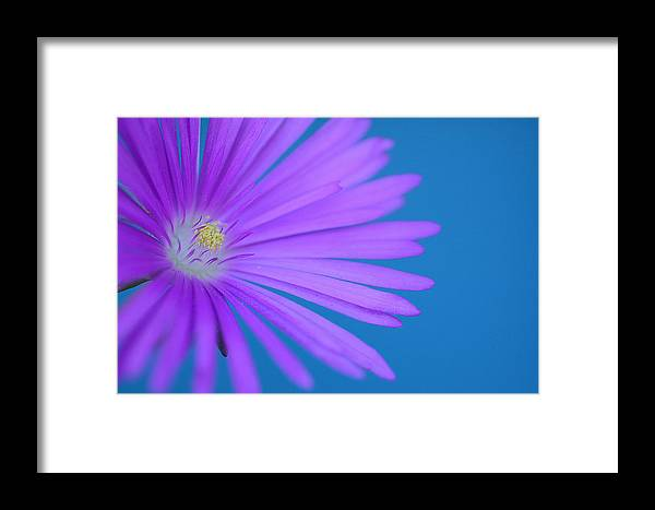 Aster Framed Print featuring the photograph Breaking Through 3 by Fraida Gutovich