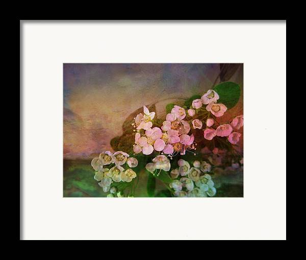 Spirea Framed Print featuring the photograph Bridal Memories by Shirley Sirois