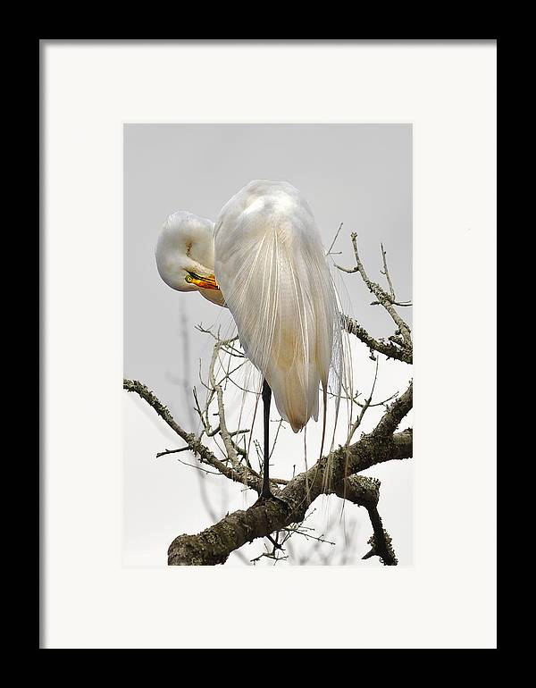 Framed Print featuring the photograph Bride Of Magnolia by Donnie Smith
