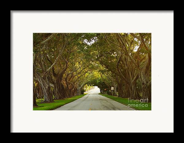 Banyan Framed Print featuring the photograph Bridge Road Banyans by Lynda Dawson-Youngclaus